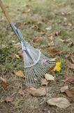 Rake with leaves Royalty Free Stock Image