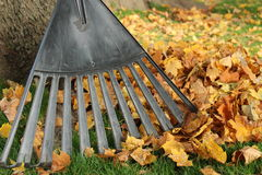 Rake Leaves Royalty Free Stock Images