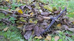 Rake the leaves stock video footage