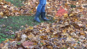 Rake leaves maple dry stock video footage