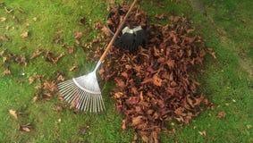 rake leaves Stock Photo