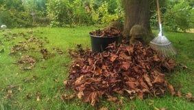 rake leaves Stock Photography