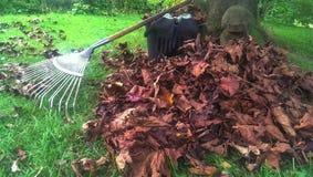 rake leaves Stock Photos