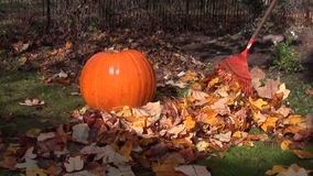 Rake leaves pumpkin grass stock video footage