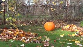 Rake leaves pumpkin grass stock footage