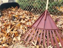 Rake and leaves Stock Photo