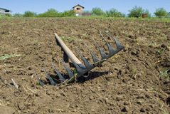 Rake lying on the plowed plot Stock Images