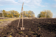 Rake and shovel in a plowed field and dug earth in the garden Royalty Free Stock Photography