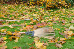 Rake Tools Lie Autumn Meadow Ground Color Leaves Royalty Free Stock Photo