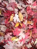 Raked leaves Royalty Free Stock Image