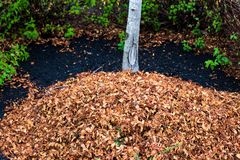 Raked leaves in a pile under a tree with plants.  royalty free stock photography