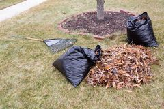 Raked pile of dried autumn leaves in a garden. Alongside black plastic rubbish bags and a metal rake lying on a lawn while cleaning up the neighbourhood Royalty Free Stock Photography
