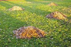 Raken lascia i mucchi in iarda di autunno. Pulizia del giardino Fotografia Stock Libera da Diritti