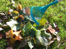 Raker and leaves Stock Images