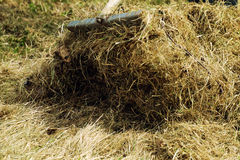 Rakes hay field landscape Stock Images