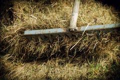 Rakes hay field landscape Stock Photo