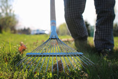 Rakes to collect old grass. Clean area backyard at a country house from old leaves and grass stock photos