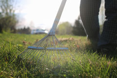 Rakes to collect old grass Royalty Free Stock Photos
