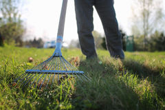 Rakes to collect old grass Stock Image