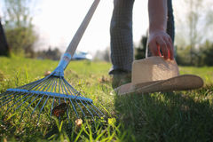 Rakes to collect old grass. Man with a lawn rake cleans the country of excess debris stock photos