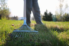 Rakes to collect old grass. Man with a lawn rake cleans the country of excess debris stock images