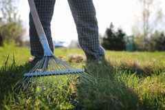 Rakes to collect old grass. Man with a lawn rake cleans the country of excess debris royalty free stock photography