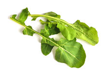 raket för 01 leaf Royaltyfri Bild