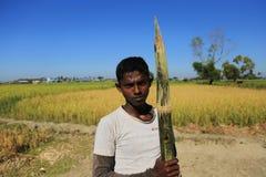 RAKHINE-TILLSTÅND, MYANMAR - NOVEMBER 05: Hundratals muslimska Rohingya lider sträng undernäring i överbefolkade läger i Myanm Royaltyfri Bild