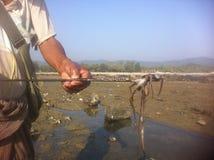 Rakhine tioarmad bläckfisk Fisher Royaltyfri Foto