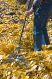 Raking Royalty Free Stock Image