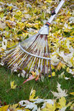 Raking autumn foliage Stock Images