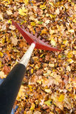 Raking Autumn Leafs POV. Raking fallen leaves onto a tarp for easier disposal: annual garden chore royalty free stock image