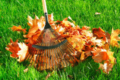 Raking the autumn leaves stock image
