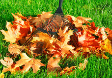 Raking the autumn leaves. Garden work. Raking the autumn leaves Stock Photography