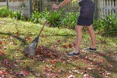 Raking Autumn leaves in the garden. Doing Garden maintenance. Royalty Free Stock Photo