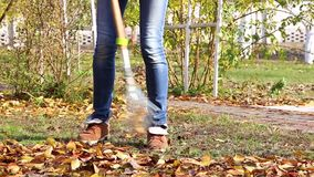 Raking autumn leaves stock video