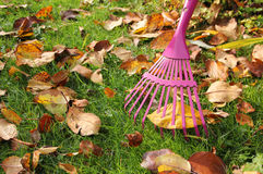 Raking autumnal leaves at garden lawn Stock Image