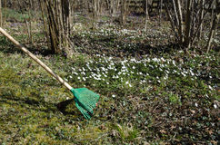 Raking dry leaves among flowers at spring Royalty Free Stock Photos