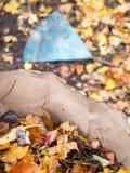 Raking fall leaves. Into compostable bag Stock Image