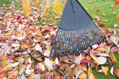 Raking Fall Leaves in Garden Closeup royalty free stock images