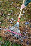 Raking Fall Leaves Royalty Free Stock Photo