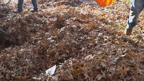Raking fall leaves with rake autumn leaves on pavement and broom stock video footage