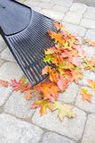Raking Fallen Oak Leaves Vertical Royalty Free Stock Photo