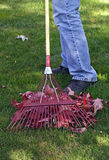 Raking leaves. Man cleaning lawn in the fall royalty free stock photo