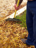 Raking the leaves Stock Photos