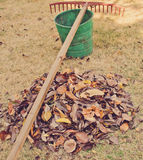 Raking the leaves Royalty Free Stock Image
