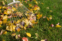 Raking the leaves Stock Photo