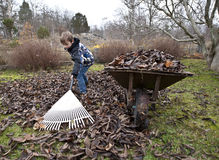 Raking leaves Stock Photography