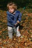 Raking Leaves. Preschool boy helping with yard work stock images