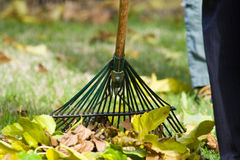 Raking Leaves. Yard work raking leaves during fall Royalty Free Stock Photography